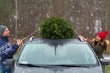 Choinka. Jak przewieźć świąteczne drzewko autem?