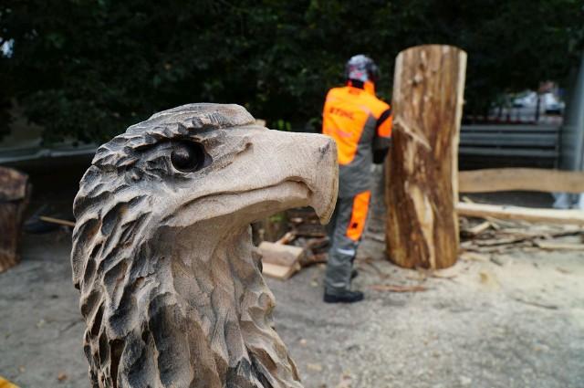 W czwartek, 23 września w parku Wilsona w Poznaniu rzeźbiarze z Polski, Niemiec, Słowacji, Białorusi, Czech i Litwy wykonywali elementy małej architektury z drewna. W ramach konkursu głównego zostaną wykonane ławki i siedziska, a tematem przewodnim jest fauna i flora.Przejdź do kolejnego zdjęcia --->