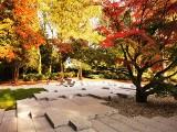 Najpiękniejsze ogrody na Śląsku na jesienny spacer. Botaniczne, japońskie, kwiatowe. Czerwone, złote, żółte. Teraz jest tam cudnie