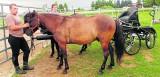 Wojciech Krzyżak: hucuły to małe konie o silnym charakterze i ogromnym sercu