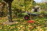 Jesień w ogrodzie. Czyli jak przygotować ogród do nadejścia zimy?