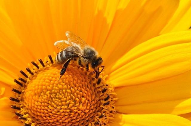 Lubelska Konferencja Pszczelarska 2016 już niebawem [program]