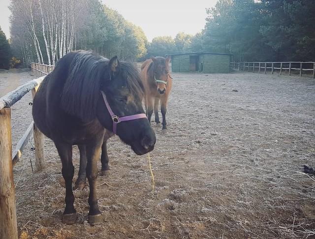 Fundacja Inter Pares z Rodzonego straciła dwa konie służące do hipoterapii. Najprawdopodobniej zostały otrute