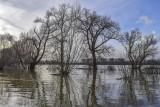Przez zmiany klimatyczne grozi nam i powódź, i susza. Wody Polskie planują inwestycje. Co się zmieni w Lubuskiem?