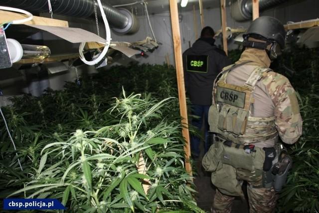 Plantację marihuany w Bytomiu udało się zlikwidować dzięki współpracy policjantów z katowickiego Centralnego Biura Śledczego Policji (wydział w Częstochowie) i funkcjonariuszy  karpackiego oddziału Straży Granicznej w Nowym Sączu