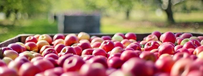 W byłych republikach radzieckich chętnie sięgają po warzywa i owoce znad Wisły