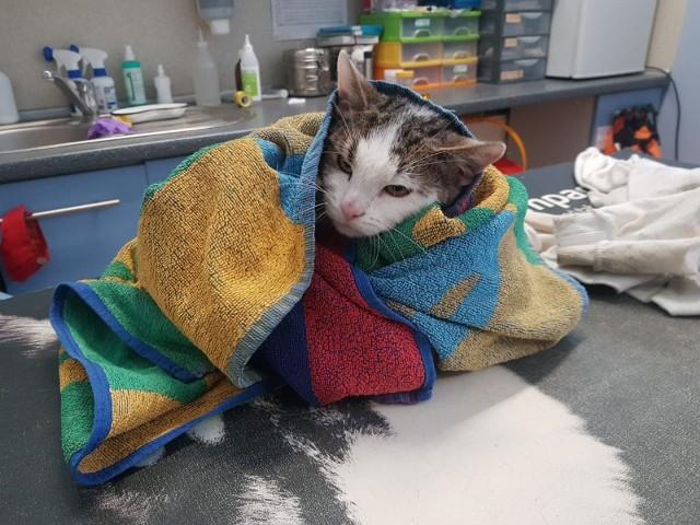 Kot zapewne utonąłby w Odrze, gdyby nie błyskawiczna reakcja pani Karoliny i jej męża. Zwierzę powoli dochodzi do siebie i wiele wskazuje na to, że wkrótce trafi do adopcji. Sprawę bada policja.