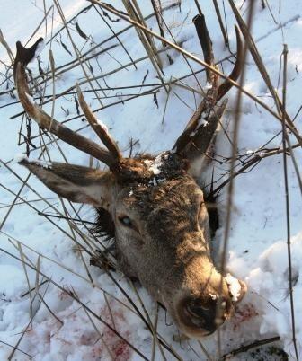 Ten łeb jelenia leśnicy znaleźli w okolicach Królowego Mostu. Pisaliśmy o tym w poniedziałek.