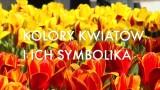 Dzień Kobiet. Uważajmy, jakie kwiaty wręczamy w prezencie. Co symbolizują ich kolory [WIDEO]