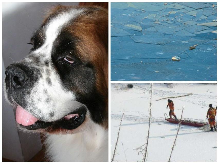 Strażacy z Międzyrzecza uratowali dziś psa, pod którym załamał się lód.