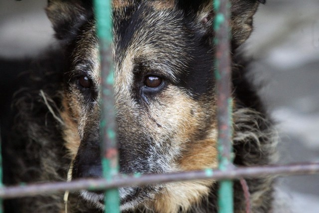 TOZ w Opolu błaga o pomoc. Organizacji brakuje pieniędzy i rąk do pracy, by móc pomagać zwierzętom.