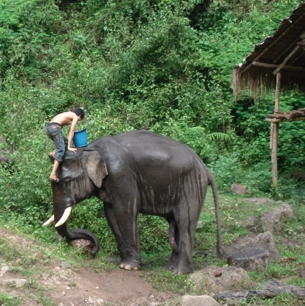 Chłopcy myli słonie - przezabawny widok, bo m.in. staje się słoniowi na głowie i tak z góry oblewa go wiadrami wody