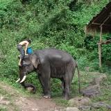 Przez dżunglę w północnej Tajlandii