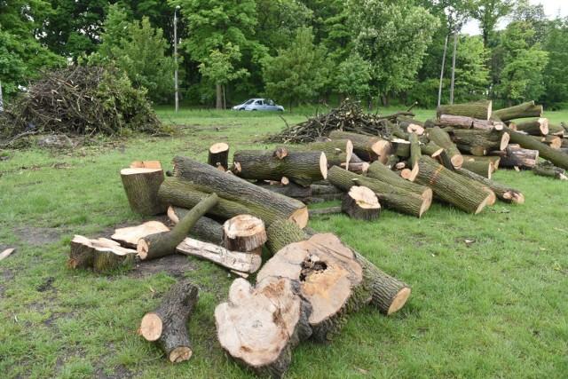 Jak informuje Urząd Miasta Torunia w Parku Glazja, ze względów bezpieczeństwa, zostały wycięte drzewa obumarłe, bądź zamierające, z licznymi wypróchnieniami, uszkodzeniami pnia czy zachwianą statyką