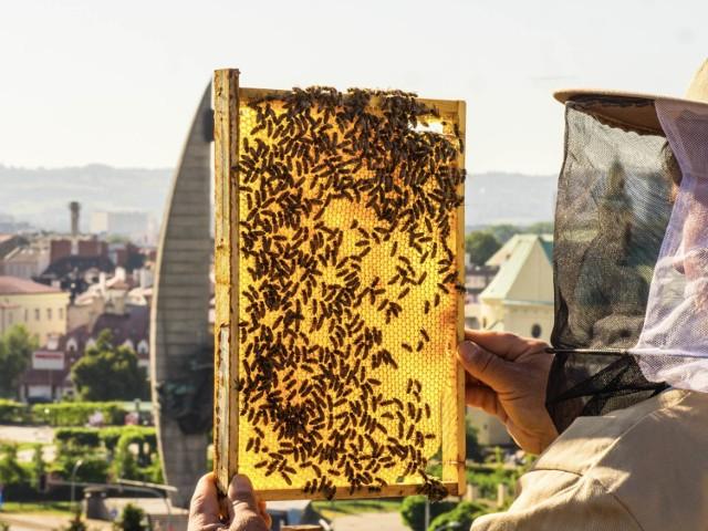 Bank Pszczeli odbuduje pasiekę pszczelarza, którego ule zostały zalane ropą
