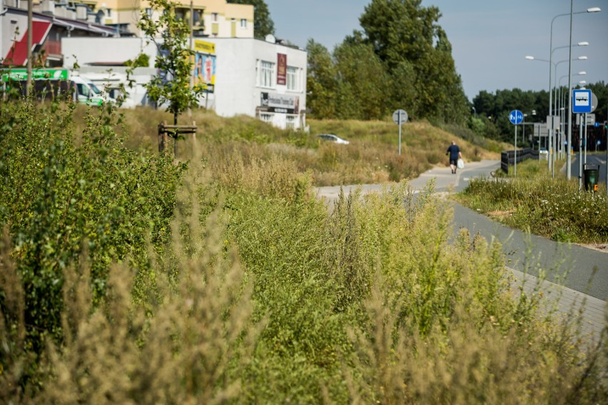 Bydgoszcz zarasta chwastami, ale ratusz nie ma zamiaru nic z tym zrobić