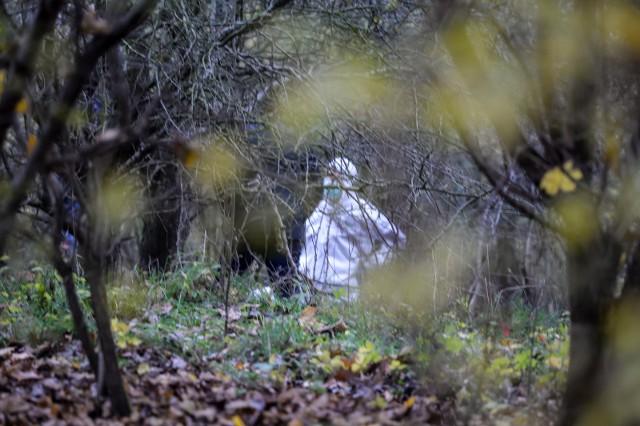 Grzybiarz znalazł ludzkie szczątki w lesie koło Osjakowa. Zdjęcia ilustracyjne