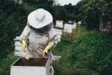 Dla każdego pszczelarza zatrucie pasieki to po prostu dramat. Na Pomorzu są już pierwsze w tym roku przypadki. Winne są opryski