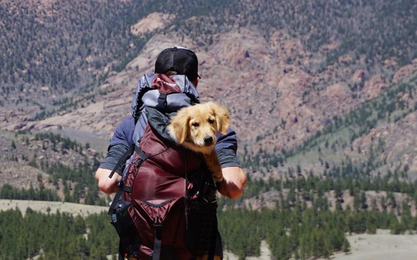 KPN jest miejscem, do którego możemy zabrać psy na długą...