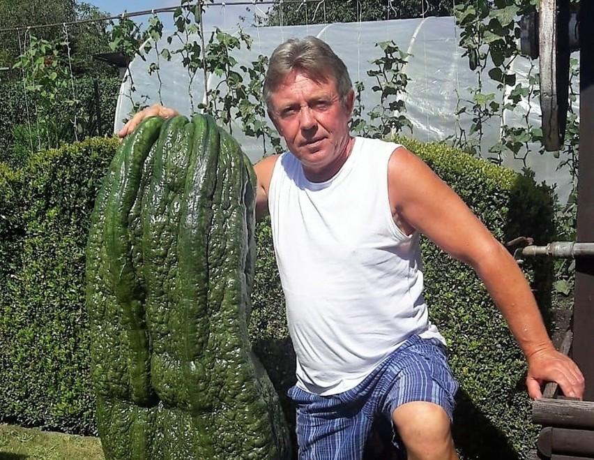 Rekordowe warzywa urosły w Raciborzu! Są największe w Polsce.Zobacz kolejne zdjęcia. Przesuwaj zdjęcia w prawo - naciśnij strzałkę lub przycisk NASTĘPNE