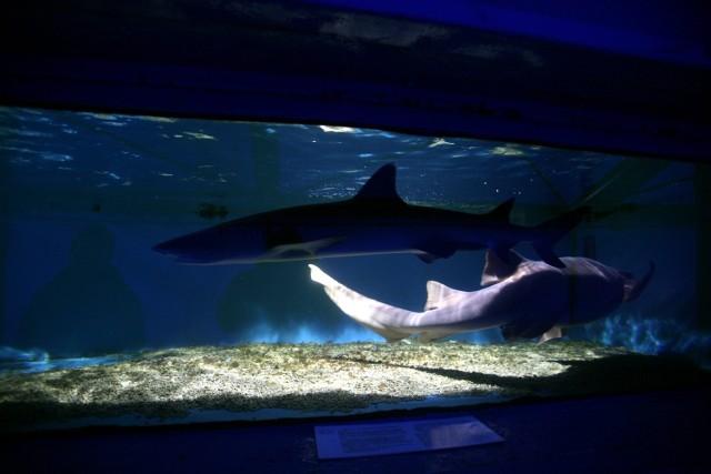 Akwarium w Parku Handlowym Arena w Gliwicach