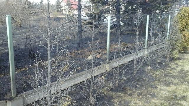 Pożar trawy przy ul. Krętej