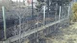 Pożary traw w Mysłowicach. Zapalił się budynek gospodarczy ZDJĘCIA