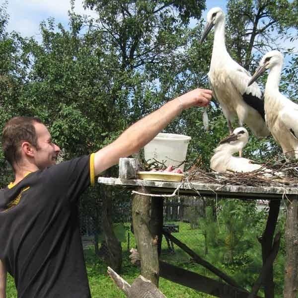 Dla bocianów rodzina Głogowskich przygotowała rusztowanie i naznosiła gałęzie, żeby ptaki mogły poczuć się jak w gnieździe.