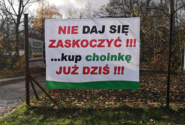 W Krakowie mamy już kilka punktów, w połowie listopada, gdzie można kupić żywą choinkę!