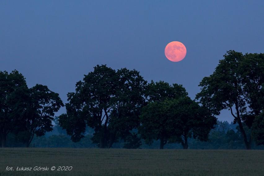 Czerwcowa pełnia Księżyca często nazywana jest Truskawkową. Nazwę tą stosowały indiańskie plemiona Algonkinów. Odnosi się ona do okresu zbiorów truskawek. Następna szansa na zobaczenie tego zjawiska dopiero za rok. Zdjęcia wykonano 05.06.2020 r. o godzinie 21:24 - 21:43 na obrzeżach Chojnic.Zobacz także: Satelity Starlink miliardera Muska przeleciały nad Dębnicą Kaszubską.