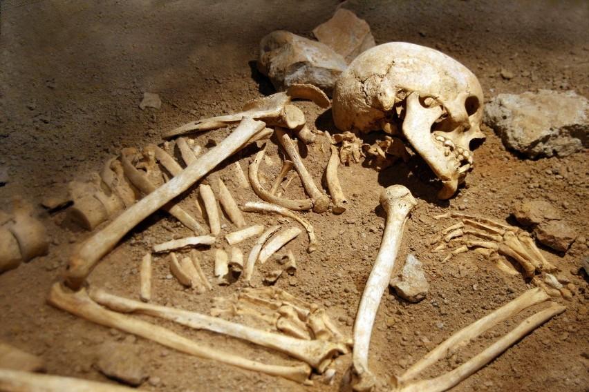 Archeolodzy w Gdańsku wykopali 14 szkieletów z pierwszej...
