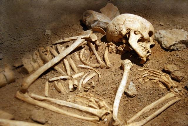 Archeolodzy w Gdańsku wykopali 14 szkieletów z pierwszej połowy XX wieku.