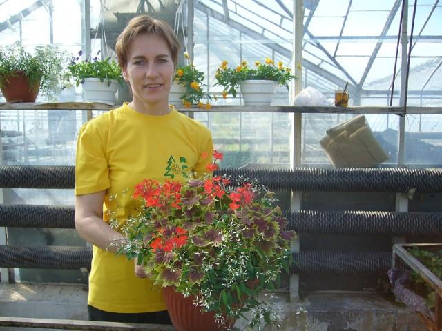 Anna Kępkowska z Rejonowego Przedsiębiorstwa Zieleni pokazuje kompozycję roślin, najmodniejszą w tym sezonie: z pelargonii o ozdobnych liściach i wilczomleczu.