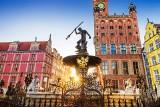 Gdańsk: miasto odrzuca wniosek o konsultacje. Chodzi o ewentualną wycinkę drzew w gdańskim Pasie Nadmorskim