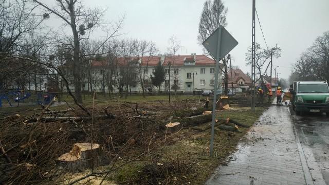 wycinka drzew w Siechnicach