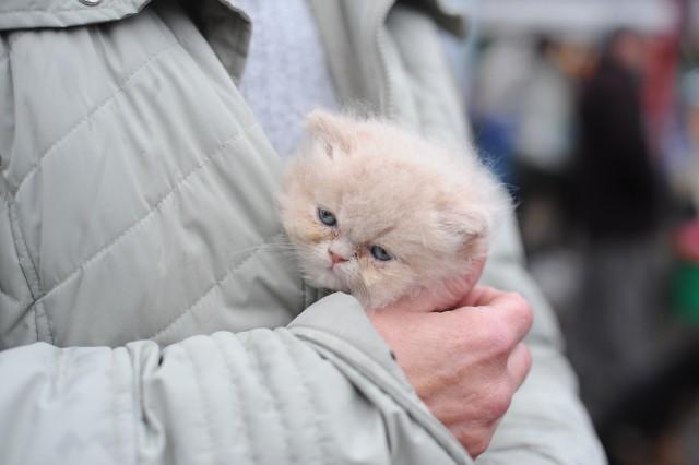 W palmiarni będzie można obejrzeć koty, najczęściej popularne dachowce, przeznaczone do adopcji