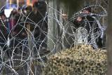 Migranci i uchodźcy znów zmierzają do Europy. Czy grozi nam nowy kryzys migracyjny? Erdogan: Turcja nie może już realizować umowy z UE