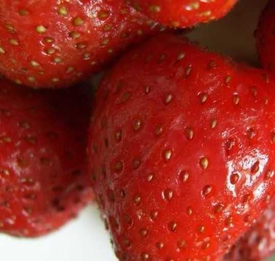 Świętokrzyscy hodowcy truskawki chcą teraz podbić Włochy polskimi owocami