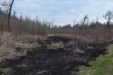 Powiat hrubieszowski: Policjanci zatrzymali podpalacza traw. Mężczyzna wpadł na gorącym uczynku