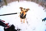 """Czy psy ze skierniewickiego schroniska trafią do """"psiego więzienia""""? To będzie dramat zwierząt"""