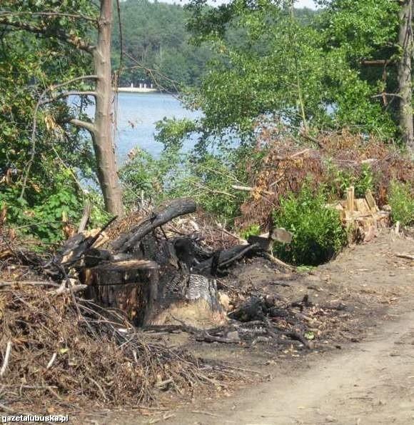 Drzewa nad jeziorem Lubiąż wycięto w czerwcu ubiegłego roku