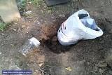Krzewy i ponad 4 tys. porcji narkotyków - policja zlikwidowała plantację (ZDJĘCIA, FILM)