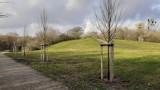 W Poznaniu posadzono drzewa za frekwencję wyborczą. Gdzie? Zobacz zdjęcia