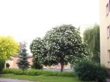 Reporter BBC Rob McBride - miłośnik drzew  - przyjedzie do Rzeszowa zobaczyć drzewo czarnego bzu