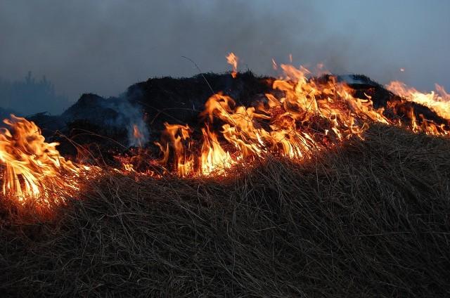 Pożar nieużytków objął ok. 9 hektarów. W sumie w akcji gaśniczej uczestniczyło 27 strażaków.