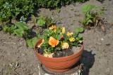 Długo oczekiwana wiosna nareszcie zawitała do Zgierza!