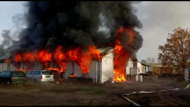 Pożar hali w na ul. Przyszłości Nowej Soli wybuchł w poniedziałek, 11 listopada, rano. Ogień gasiły jednostki ochotniczej i zawodowej straży pożarnej z Przyborowa, Otynia, Studzieńca, Nowego Miasteczka i Nowej Soli.Informację o pożarze strażacy otrzymali po godz. 8.00. Kiedy dotarli na miejsce pożar obejmował już całą halę. Ogień udało się opanować, ale niestety wszystko spłonęło. Pożar strawił między innymi samochód.Zobacz też: Żary. Pożar zamku