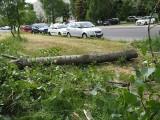 Zwalone drzewo przy ul. Zagłoby. Jednak ulewa i wichura zostawiły w Łodzi ślady