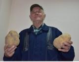 Ponad kilogramowy ziemniak gigant wyrósł na polu w Starym Bukowcu
