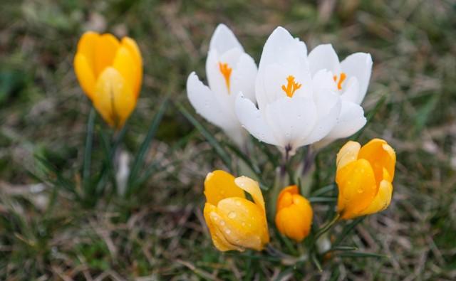 Wiosna 2019. Kiedy wypada pierwszy dzień wiosny?